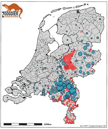 Number of pigs per municipality (blue balls, source of CBS) and the presence of wild boar in the Netherlands (red spots). Along the western Veluve and the eastern Brabant / Midden-Limburg pig farms in the current pig habitat