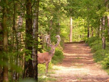 Wandelen met de boswachter, thema: natuur en cultuur, Orderbos