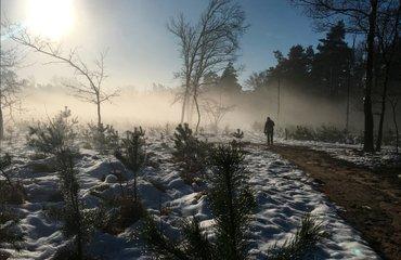 Wandelen met de boswachter, thema: naaldbomen Loenermark
