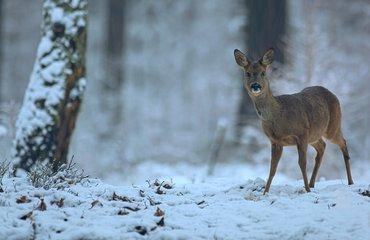 Wandelen met de boswachter, thema: dierenwinterweetjes Wilde Kamp