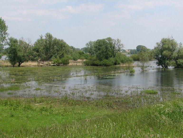 Hoogwater tijdens de onderzoeksperiode zorgde voor een uitgelezen kans om in praktijk onderzoek te doen in de Buiten-Ooij