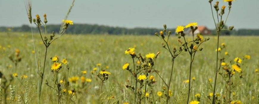 Ontwikkeling Biodiversiteitsmonitor Akkerbouw