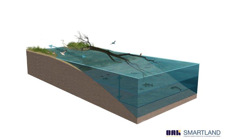 Voorbeeld van een zachte oever met rivierhout