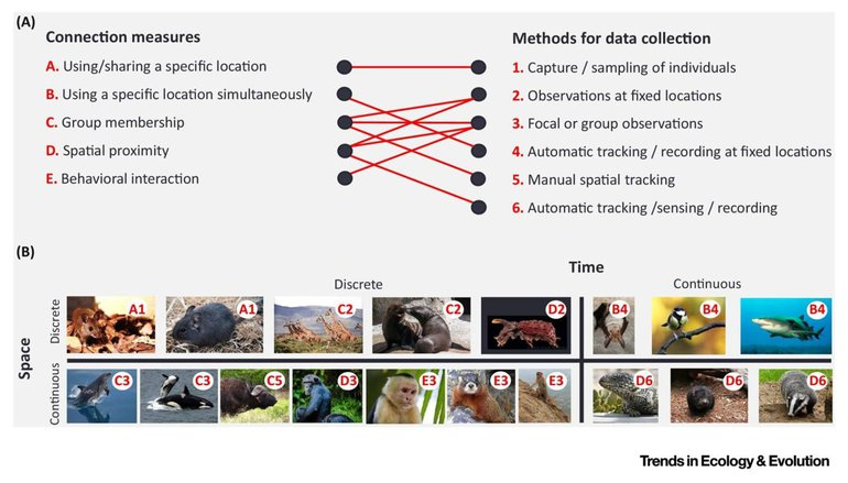 Measures and methods for quantifying animal social networks
