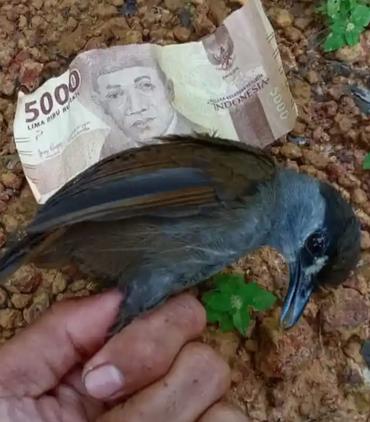 Hidup tikus hitam-coklat Malia di sebelah uang kertas