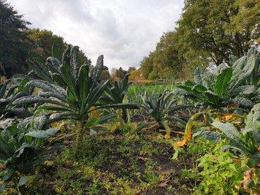Palmkoolveld LandinZicht