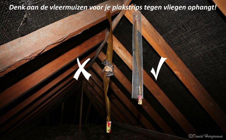 Met volièregaas kan eenvoudig voorkomen worden dat vleermuizen slachtoffer worden van plakstrips tegen vliegen