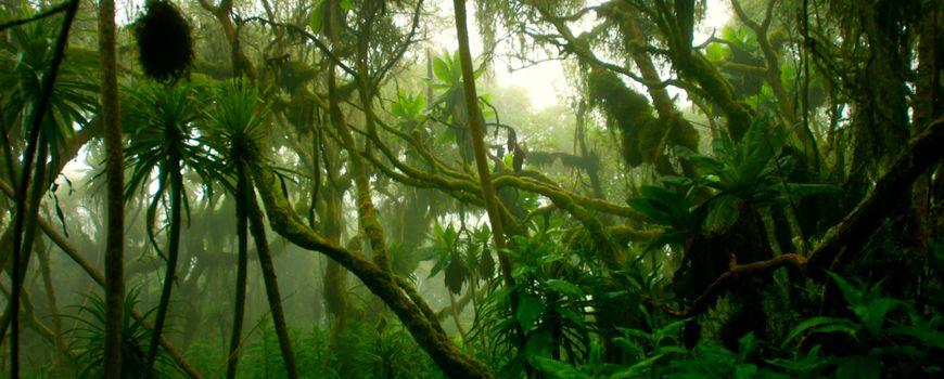 Nieuw methode concludeert: een derde van alle tropische Afrikaanse planten mogelijk met uitsterven bedreigd