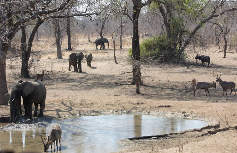 Elephants and other wildlife visiting a waterhole in Majete Wildlife Reserve, Malawi