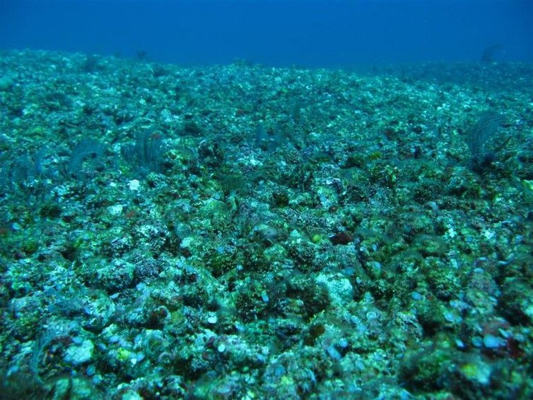 Corals damaged by dynamite fishing