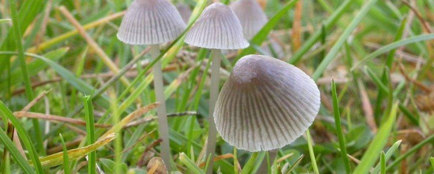 Nature Today Paddenstoelen In Je Tuin Niet Om In De Soep Te Doen