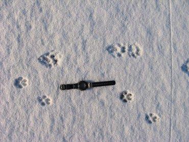 Ottersporen