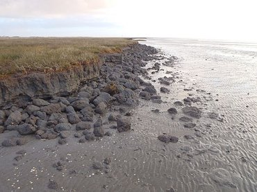 When the pressure on a salt marsh increases too much, it can tip over and get eroded by waves