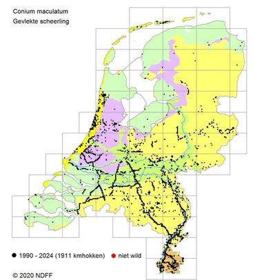 Verspreiding van de Gevlekte scheerling in Nederland. De kaart laat duidelijk zien hoe de plant bij snelwegen in de buurt groeit