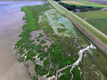 Healthy salt marshes have a wave attenuating effect, and thus protect sea walls during storms at high water levels