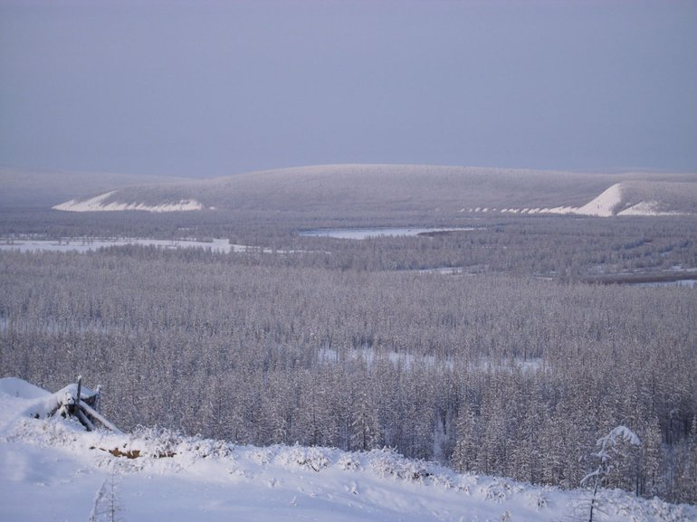 Densly forested taiga in Siberia