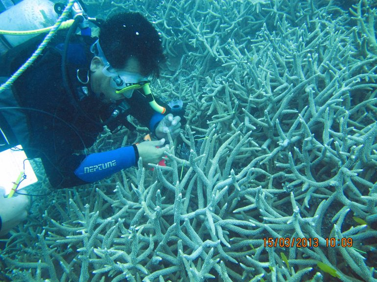Researcher investigating corals