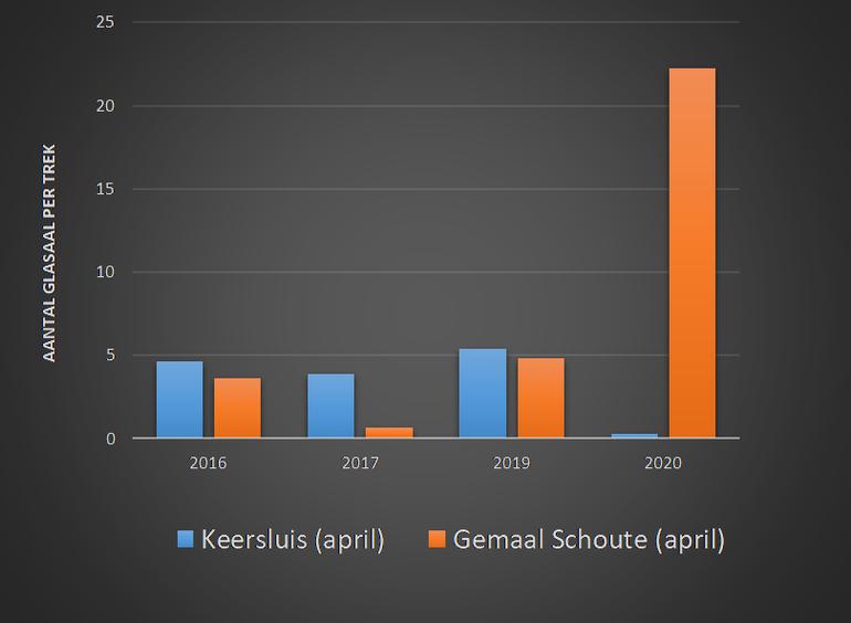 Gemiddeld aantal glasalen per trek aan de buitenzijde van de Keersluis en Gemaal Schoute in de kruisnetmonitoring door vrijwilligers in april, de belangrijkste intrekmaand voor glasaal in Scheveningen (in 2018 is bij gemaal Schoute niet bemonsterd) (Data: RAVON, Samen voor de Aal).