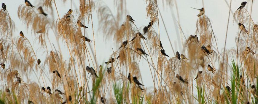 30 november: dag van #vogels en #vogelaars