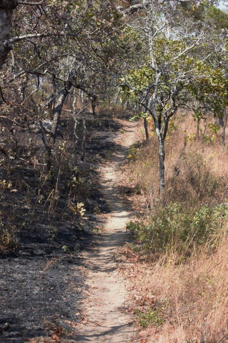 Human induced fires destroy vital parts of the natural habitat in Malawi