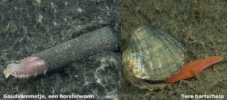 Waarnemingen van dode zeedieren geeft alleen maar inzicht in wat er geleefd heeft! Wanneer komen deze soorten hier weer terug?