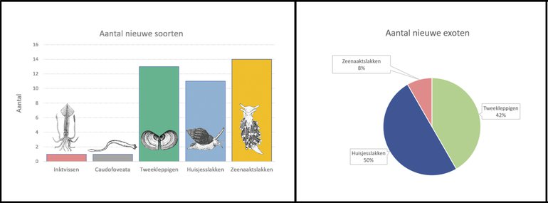 Links: nieuwe soorten (totaal veertig) uitgesplitst naar weekdiergroep. Deze weekdieren kwamen niet voor in de gids uit 2004. Ze zijn sindsdien nieuw gevonden of worden inmiddels tot onze fauna gerekend. Rechts: verdeling van de exoten (vijftien van de veertig) over de weekdiergroepen