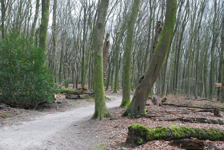 De kwaliteit van bosbodems neemt af, wat doorwerkt in de bomen. Bij zomereiken is een tekort aan magnesium, kalium en forfor gemeten