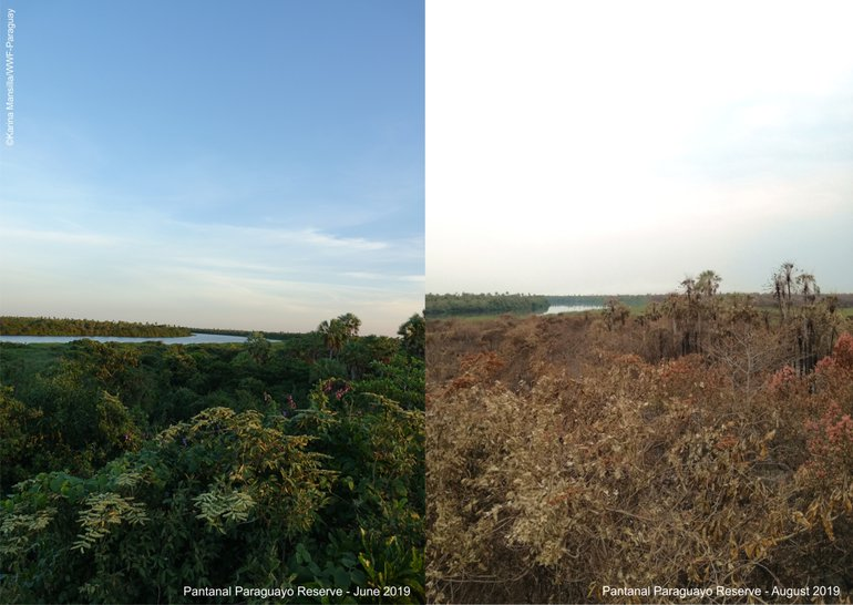 The Pantanal before and after the fires
