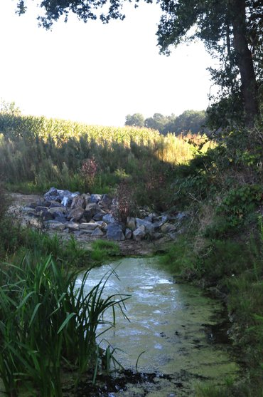 Rotspartijen stuwen het water in de Kraggeloop