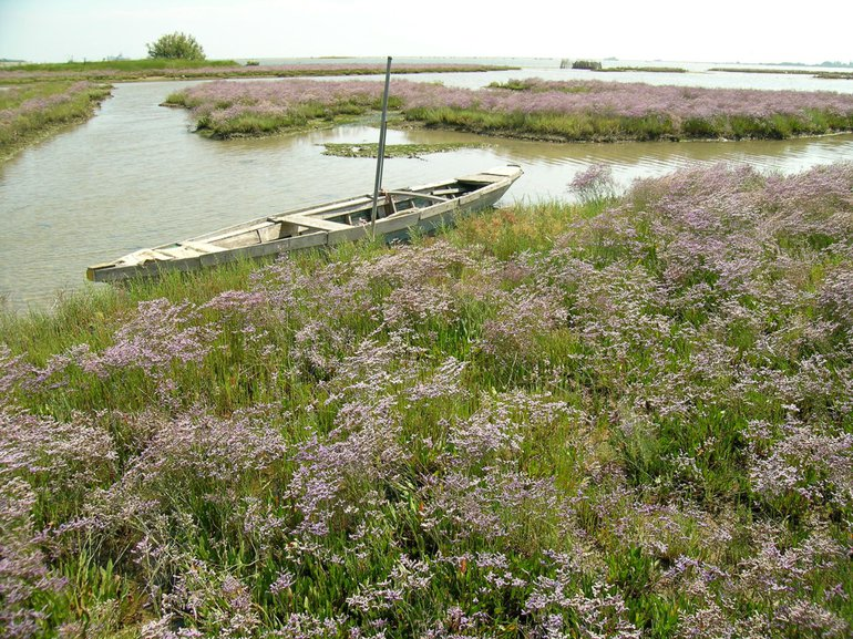 Flowering salt marshes