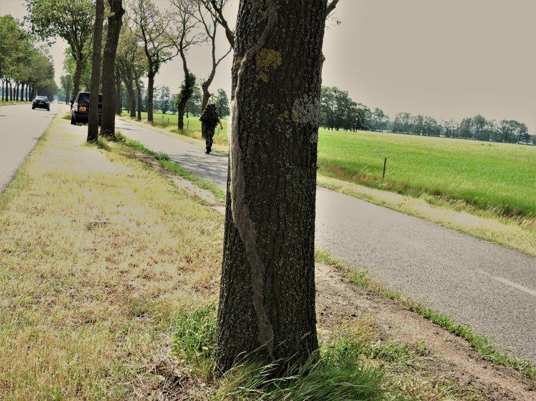 Eikenprocessierupsen komen uit de grond op 7 juni 2019