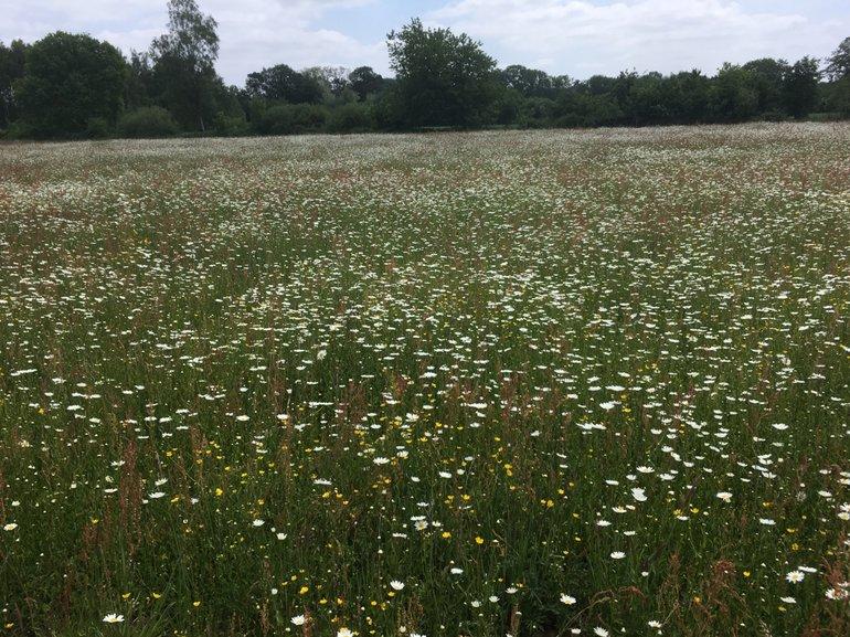 Een bloemrijk grasland, een nectaroase voor insecten, is het uiteindelijke doel van het beheertype 'kruiden- en faunarijk grasland'