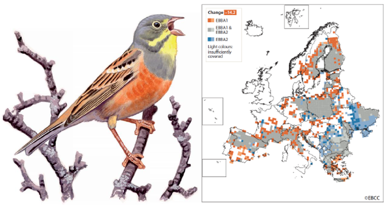 Ortolaan in European Breeding Bird Atlas 2