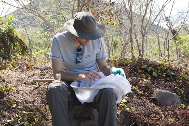 Jasper Molleman investigating the insects and spiders on St. Eustatius