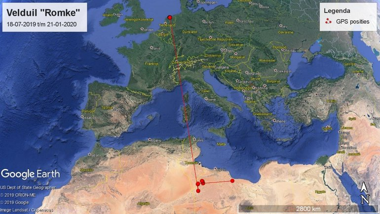 Verplaatsing van de gezenderde Velduil 'Romke' van Friesland naar Libië. Van onderweg zijn geen GPS-posities beschikbaar.