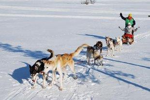 Wintersport Zweeds Lapland voor singles
