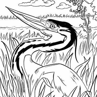 Kleurplaten Vogeltjes In De Winter.Download Leuke Kleurplaten Van Vogels Vogelbescherming