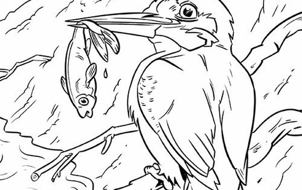 Kleurplaten Vogels.Download Leuke Kleurplaten Van Vogels Vogelbescherming