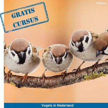 Wil je een Gratis online vogelcursus volgen