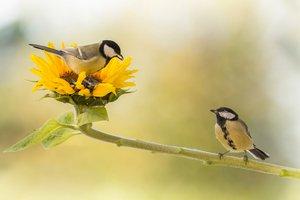 Dating vogels