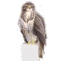 zeearend vogelbescherming nl