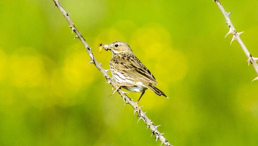 Wat doet Vogelbescherming Nederland? | Vogelbescherming