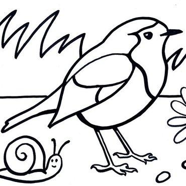 Kleurplaten Over Vogels.Download Leuke Kleurplaten Van Vogels Vogelbescherming