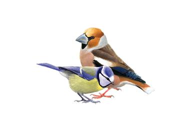 Online Vogelgids