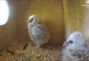 Dunya Meubel Utrecht : Beleef de lente vogelbescherming