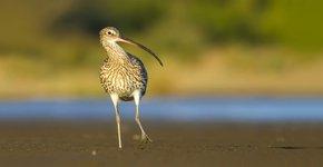 eksters zijn etterbakken of niet vogelbescherming