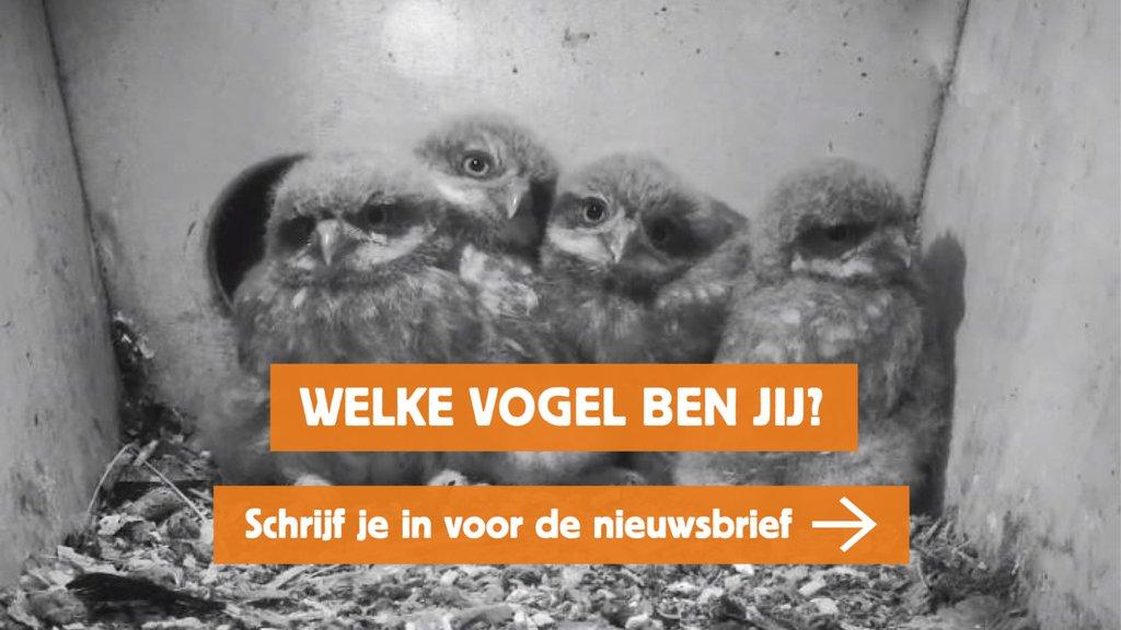 Beleef De Lente Vogelbescherming