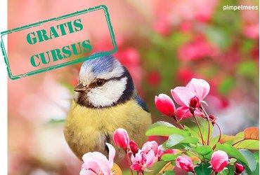Cursus Tuinvogels in Nederland