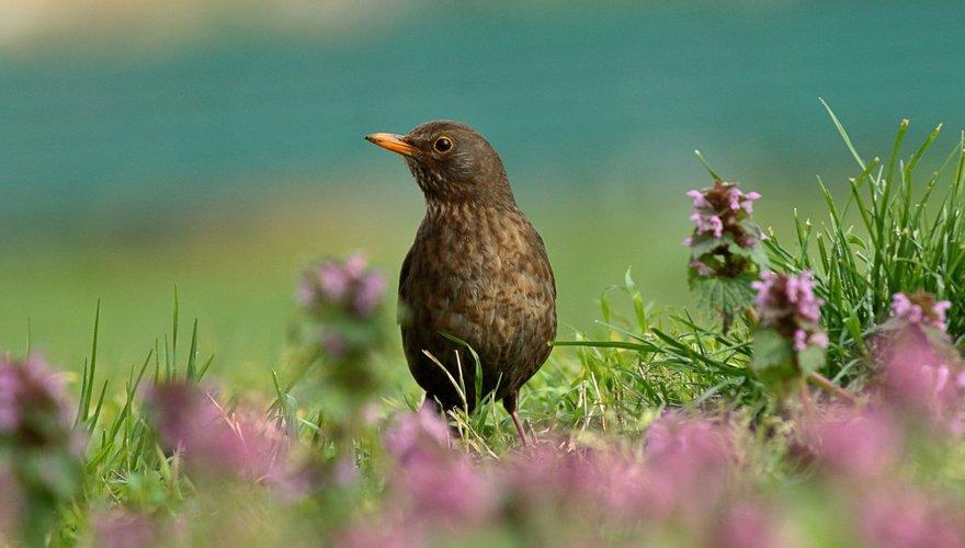 Super Meer vogels in de tuin? 2 x 9 tips | Vogelbescherming AL-55