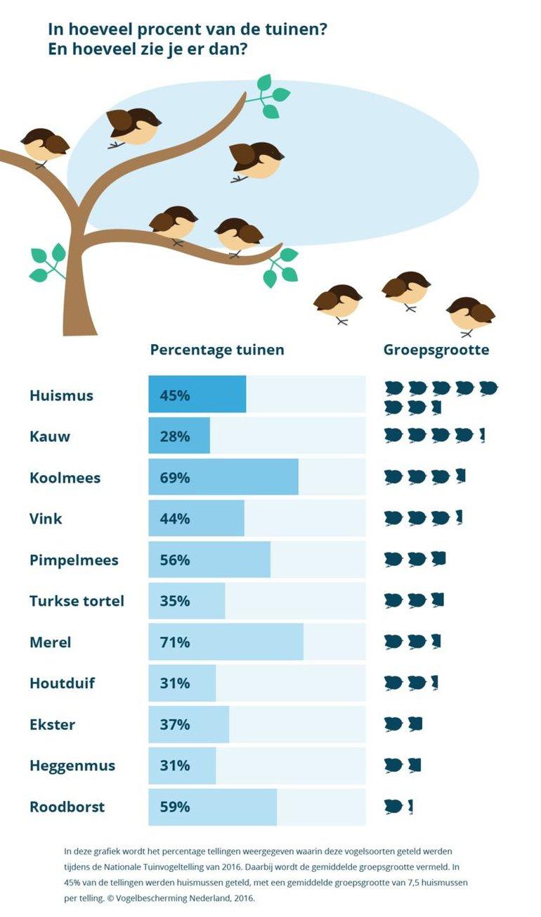 In hoeveel procent van de tuinen worden deze vogels gezien? En hoeveel vogels zie je dan (groepsgrootte)??
